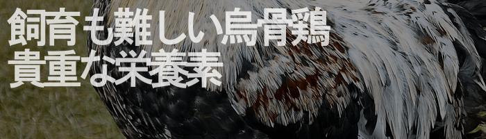 百寿の元気種の烏骨鶏卵黄成分説明