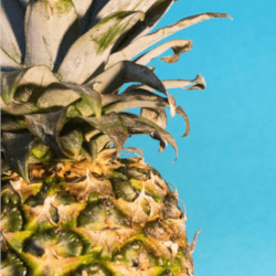 パイナップルで痩せる効果を期待