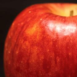 リンゴが医者を遠ざける
